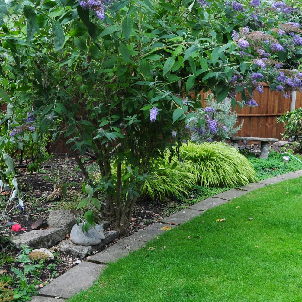 Wimbledon planting 15 Arthur Road Landscapes.jpg