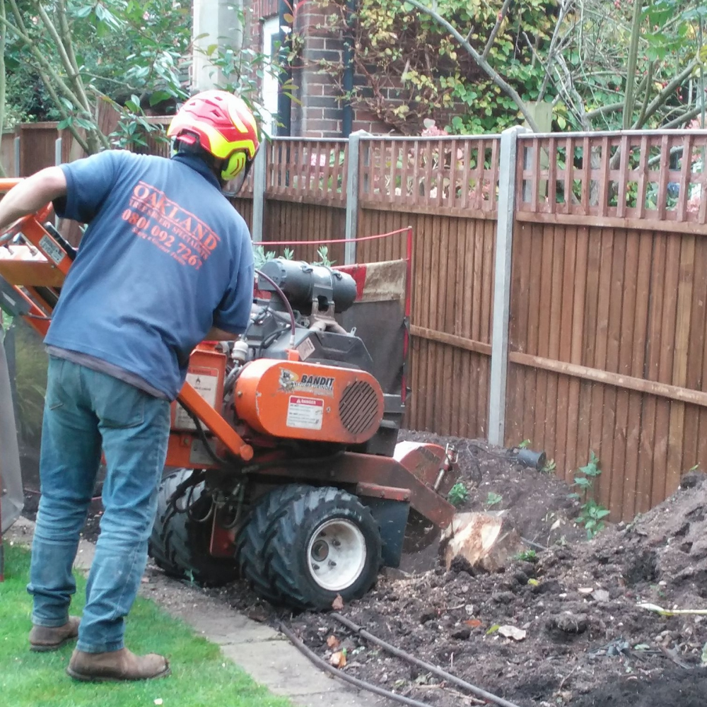 Wimbledon planting 17 Arthur Road Landscapes.jpg