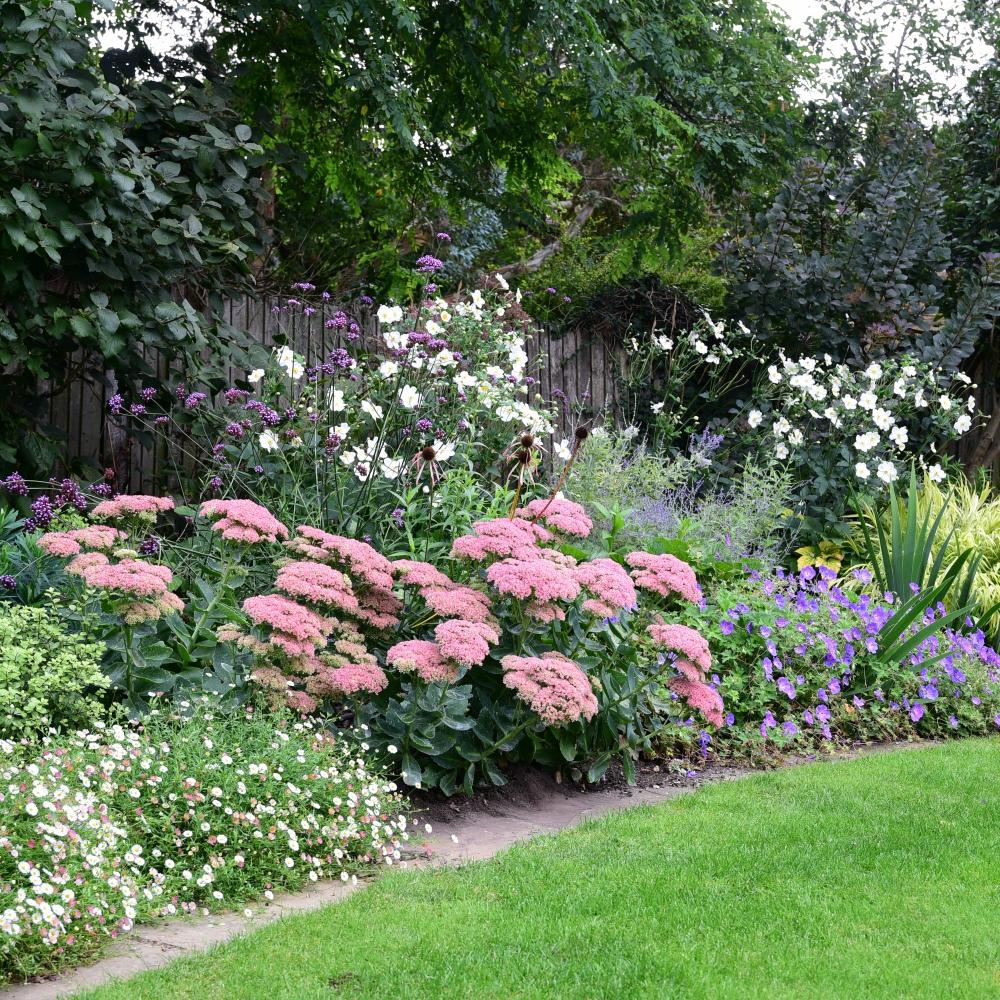 Wimbledon planting 14 Arthur Road Landscapes.jpg