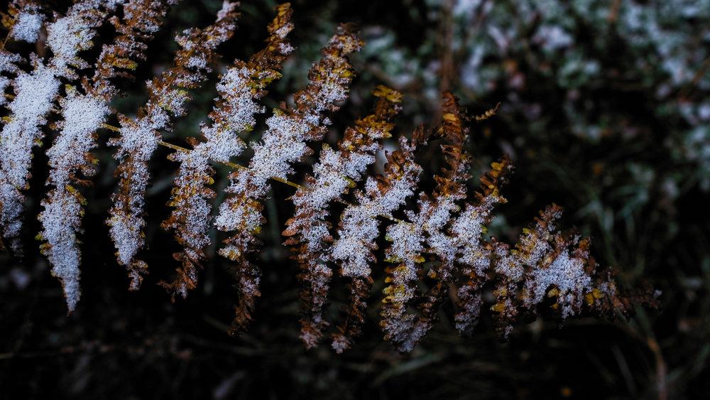 0003-winter-photography-auvergne-20171106103912.jpg
