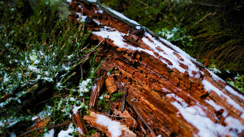 0006-winter-photography-auvergne-20171106105452.jpg