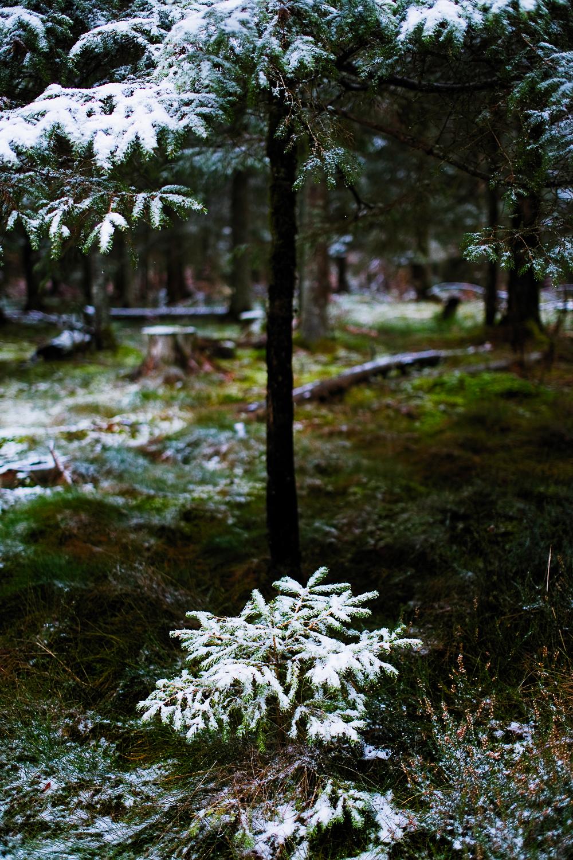 0007-winter-photography-auvergne-20171106105549.jpg