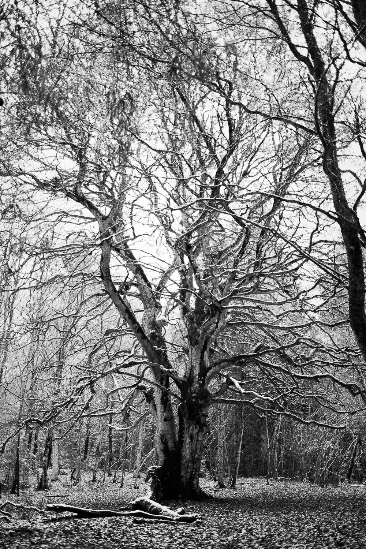 0008-winter-photography-auvergne-20171106114305.jpg