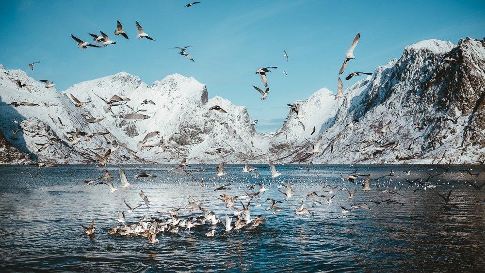 0045-voyage-photo-norvege-20190221124125-compress.jpg