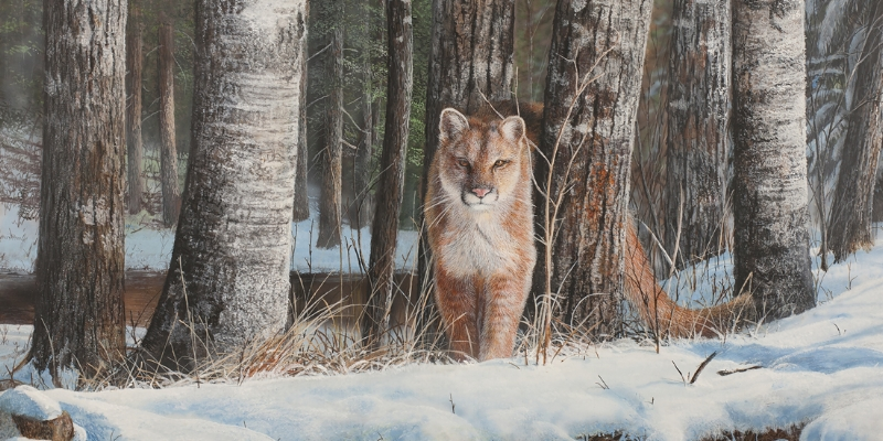 564-cougar.jpg