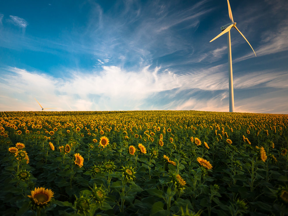 """Sunflower sunrise"" ~ Los Naveros, Cádiz Spain 2012"