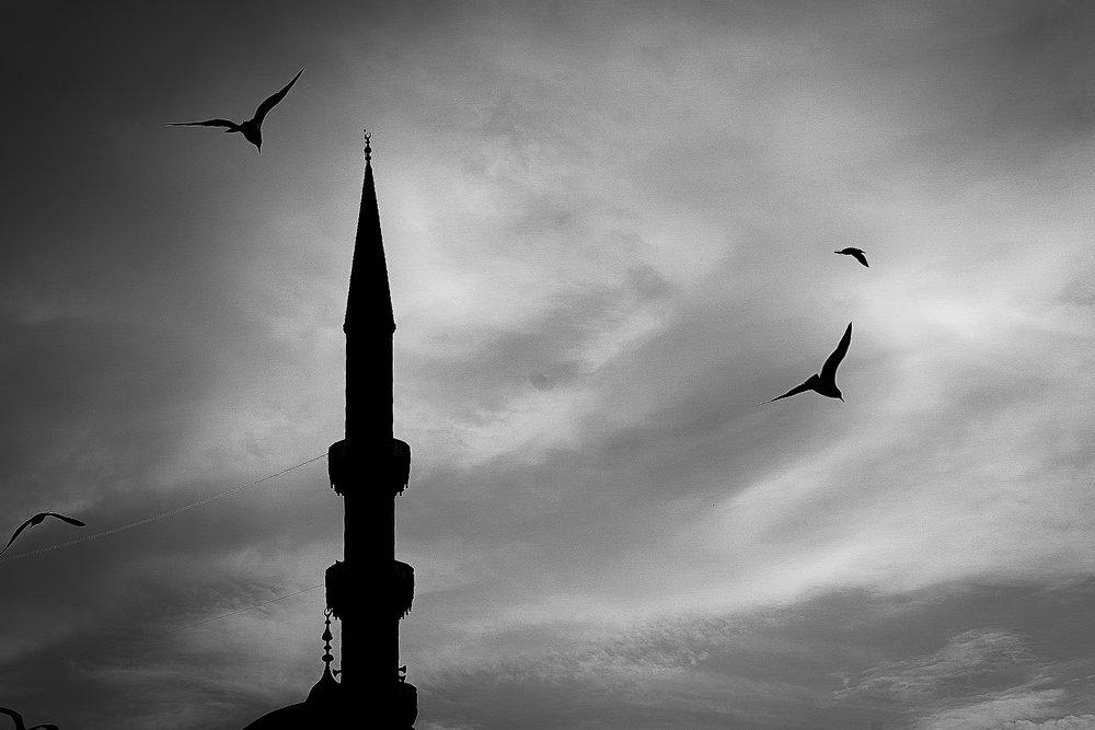 """""""Minaret & Gulls ~ Istanbul Turkey"""