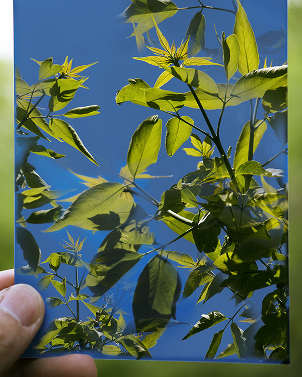 Holding a Photo of Leaves