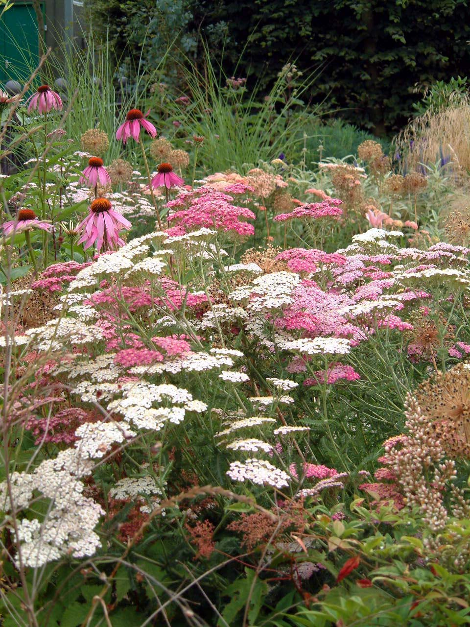 Achillea Alliums and Grass Capel Manor A 2002.JPG