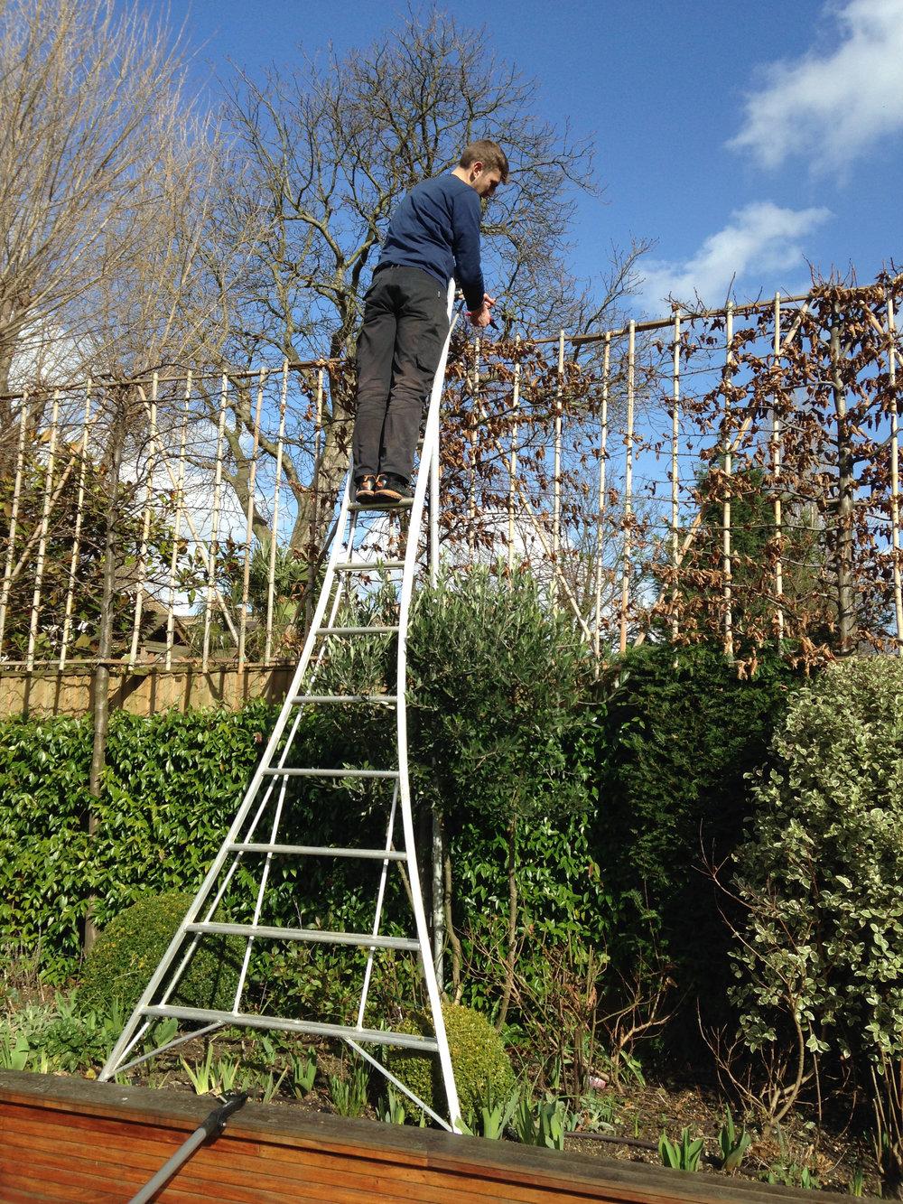 Tree work & pruning.JPG