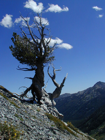 Cusick Mt Trip 144.jpg