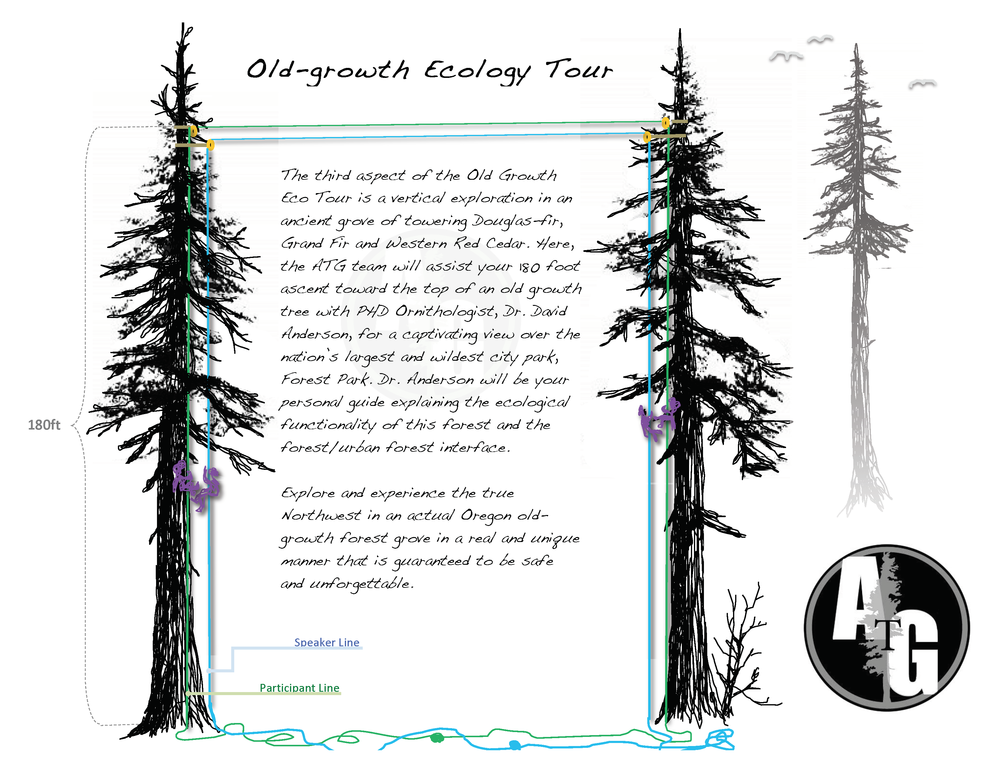 A sketch for advertising a climbing system for the National Audubon Society Conference in 2013. ATG brought 160 people near the tops of 250ft Douglas-fir trees at the Audubon Society of Portland's forest sanctuary.