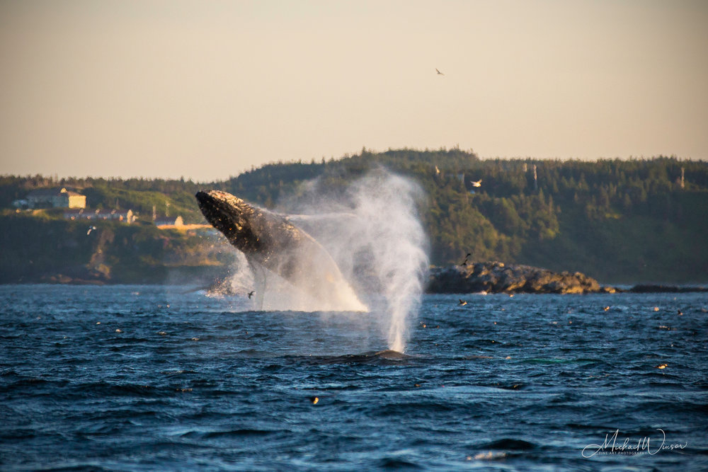Atlantic Ocean Workshop - Experience the wild Atlantic Ocean while capturing pictures of whales, puffins and icebergs.