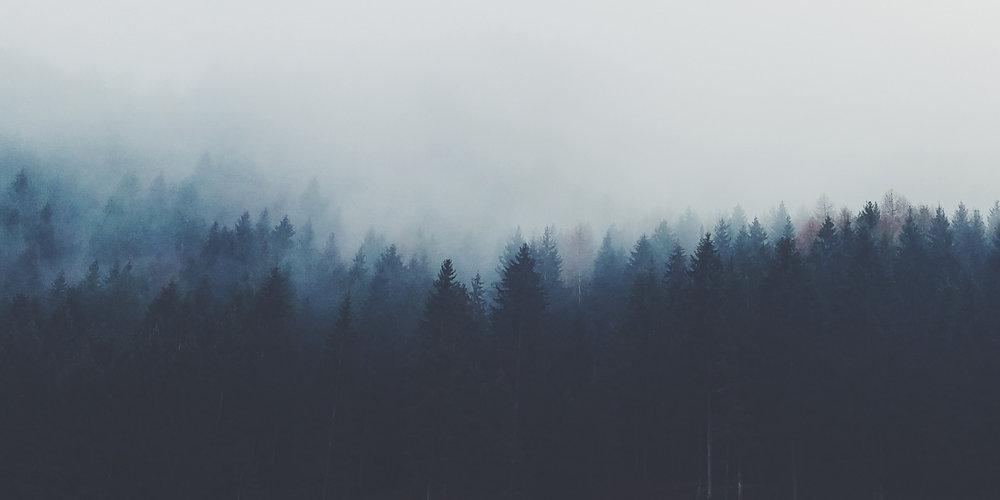 Header_Forest2.jpg