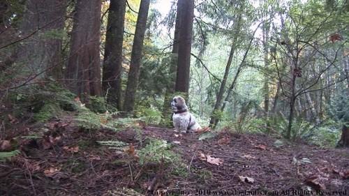 Cute dog enjoying Robert Burnaby Park