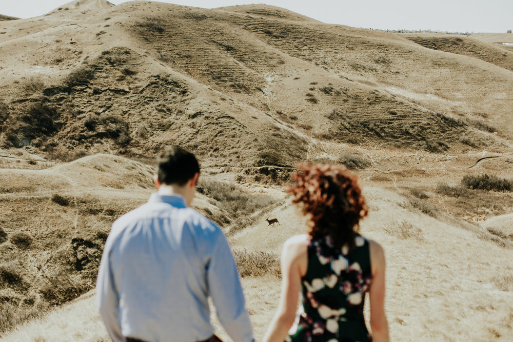 lethbridge-photographer-love-and-be-loved-photography-jodie-adam-coulee-hillside-engagement-photo-image-picture-31.jpg