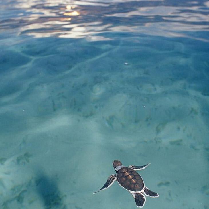 (圖片來源:www.topinspired.com)