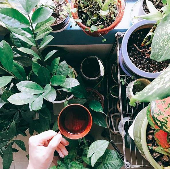 氣場的好壞是關係到氣運的吉凶,漸漸地植物的榮枯與否便成為運氣好壞的指標。 -
