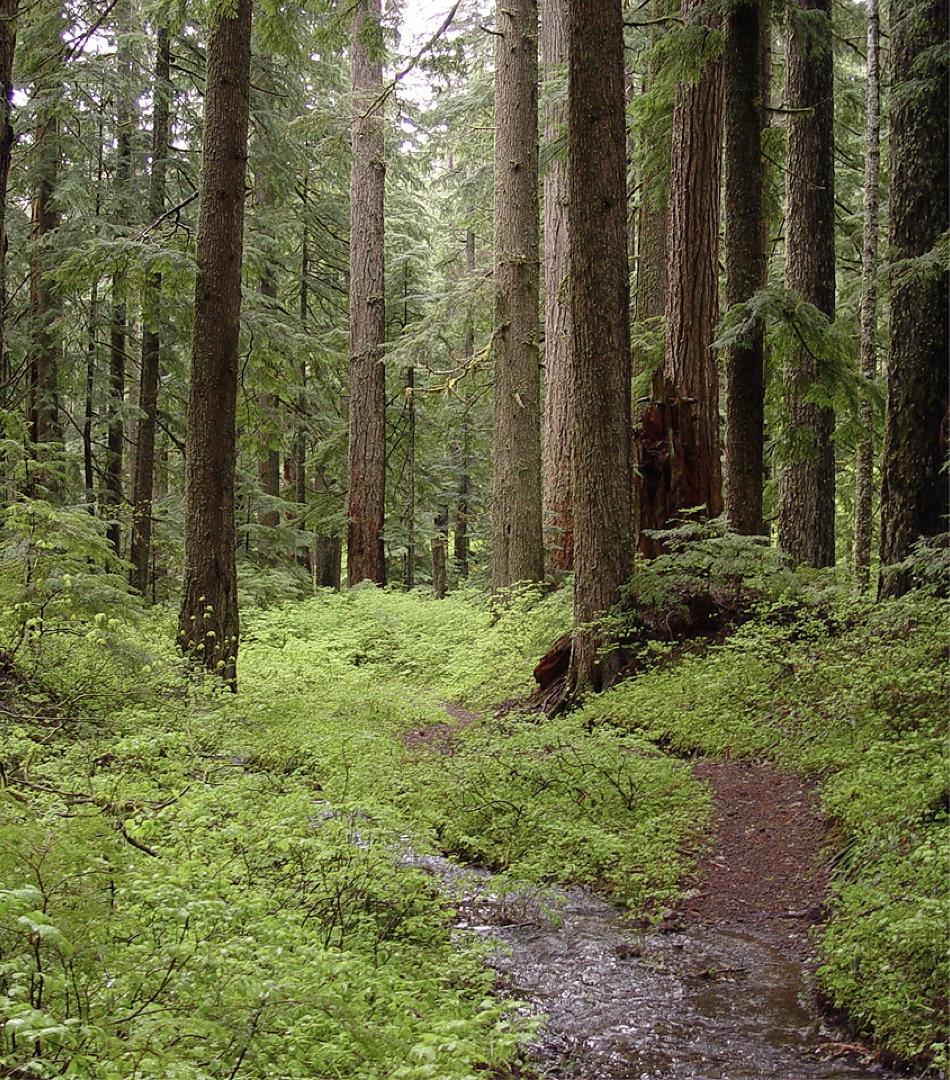 Forest Image.jpg