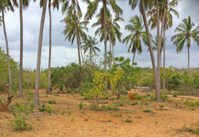 1.5 Acres of Plot in Mida Forest on the edge of the Mangrove for sale. - Ksh 12 million (Kenyan Shillings)Ref: MFGF02More Info