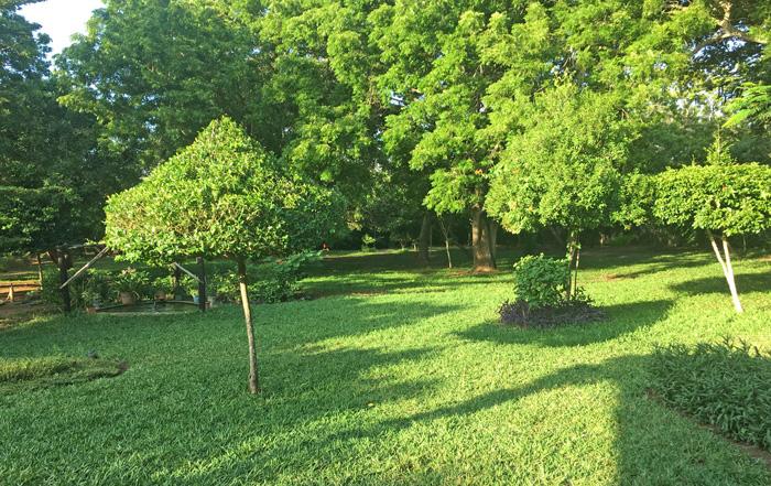 BAK-garden2.jpg