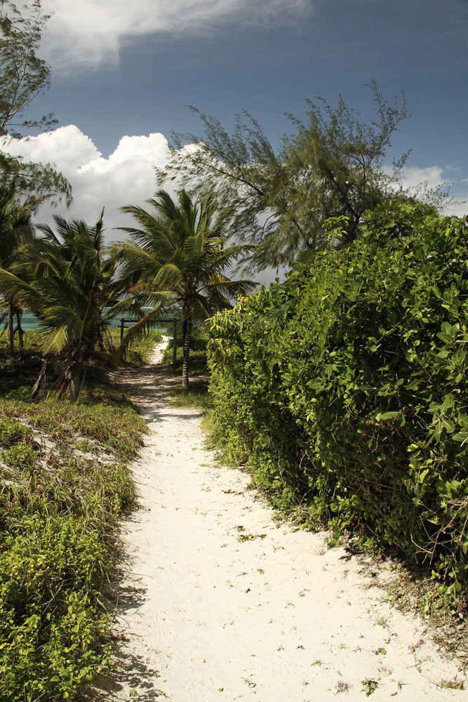 Path from House to Watamu Beach.jpg