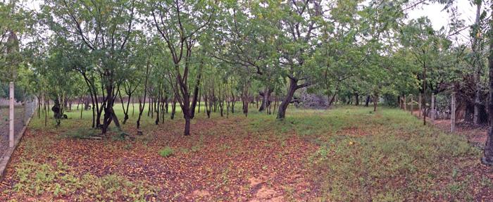 NEWSINGLE ACRE PLOT IN MIDA FOREST FOR SALE - (REF: MFMH01)