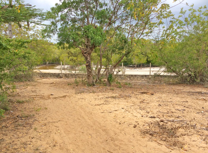 NEW1.5 ACRE PLOT ON THE EDGE OF THE MANGROVES OF MIDA CREEK FOR SALE - (Ref: MFGF02)