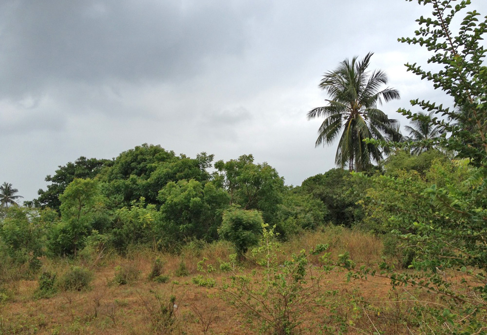 1 ACRE UNDEVELOPED PLOT CLOSE TO TURTLE BAY FOR SALE - Turtle Bay, Watamu