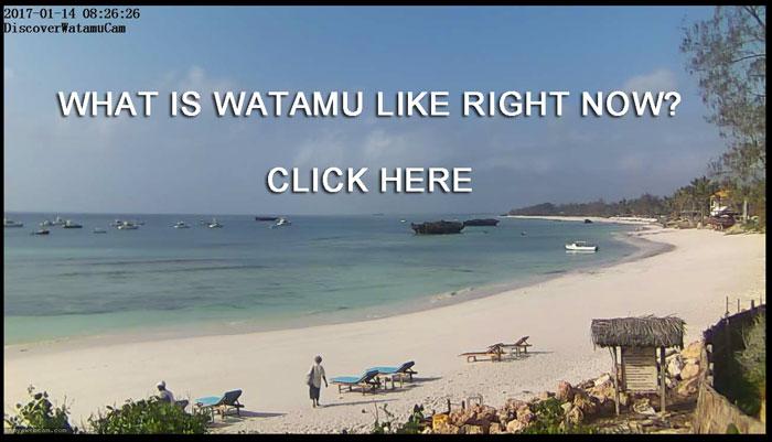 DISCOVERWATAMU LIVE WEBCAM      Click for live