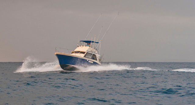 - Pete Darnborough, a Watamu Skipper of over 20 years experience can find you the perfect boat for your Watamu Deep-Sea Fishing experiene.  To contact Pete: