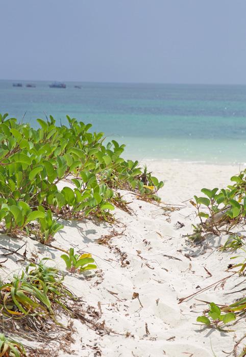 AR-beachpath.jpg