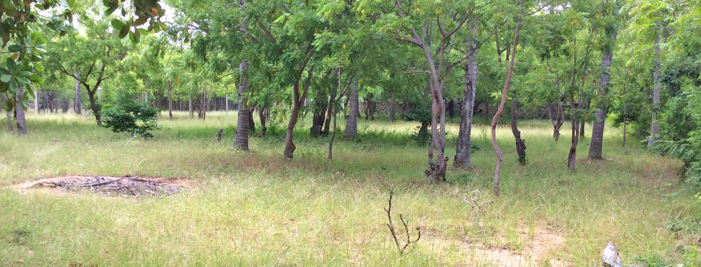 ONE ACRE PLOT IN MIDA FOREST FOR SALE - (MIDA - WATAMU)Ref: MAA01
