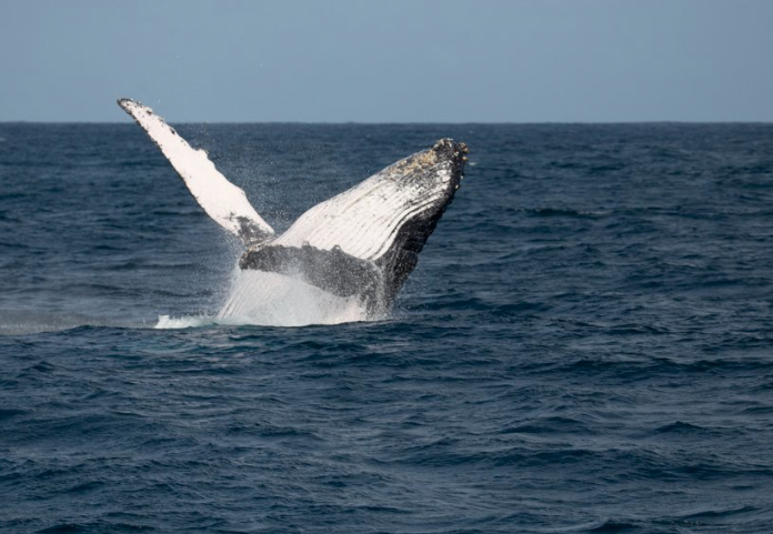 A particularly special thing to note about Mwezi House is that with it's position looking out over the Indian Ocean, it is possible to see the annual Humpack Whale migration (July to September) - so bring your binoculars! -