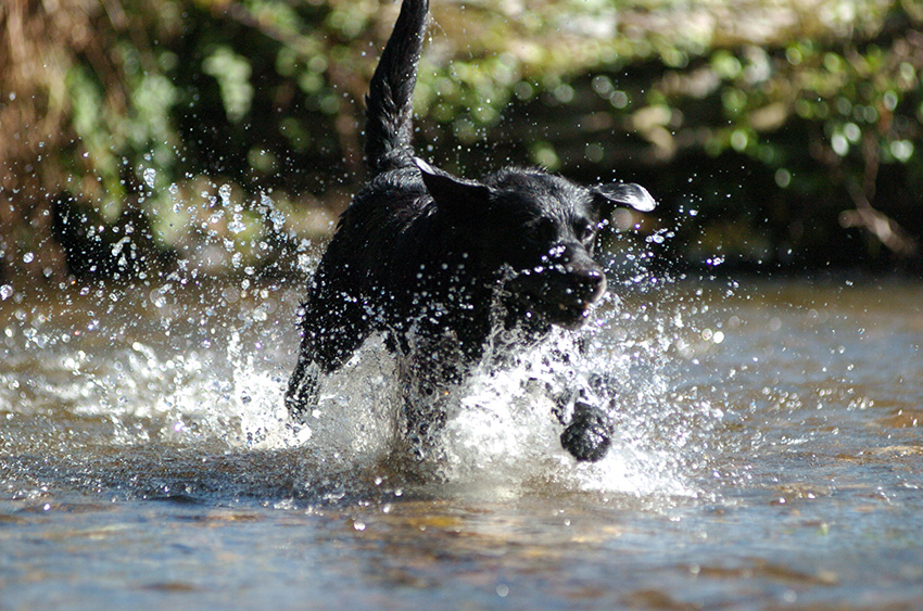Holiday cottages at Penrose Burden in Cornwall perfect for dog lovers and owners.jpg