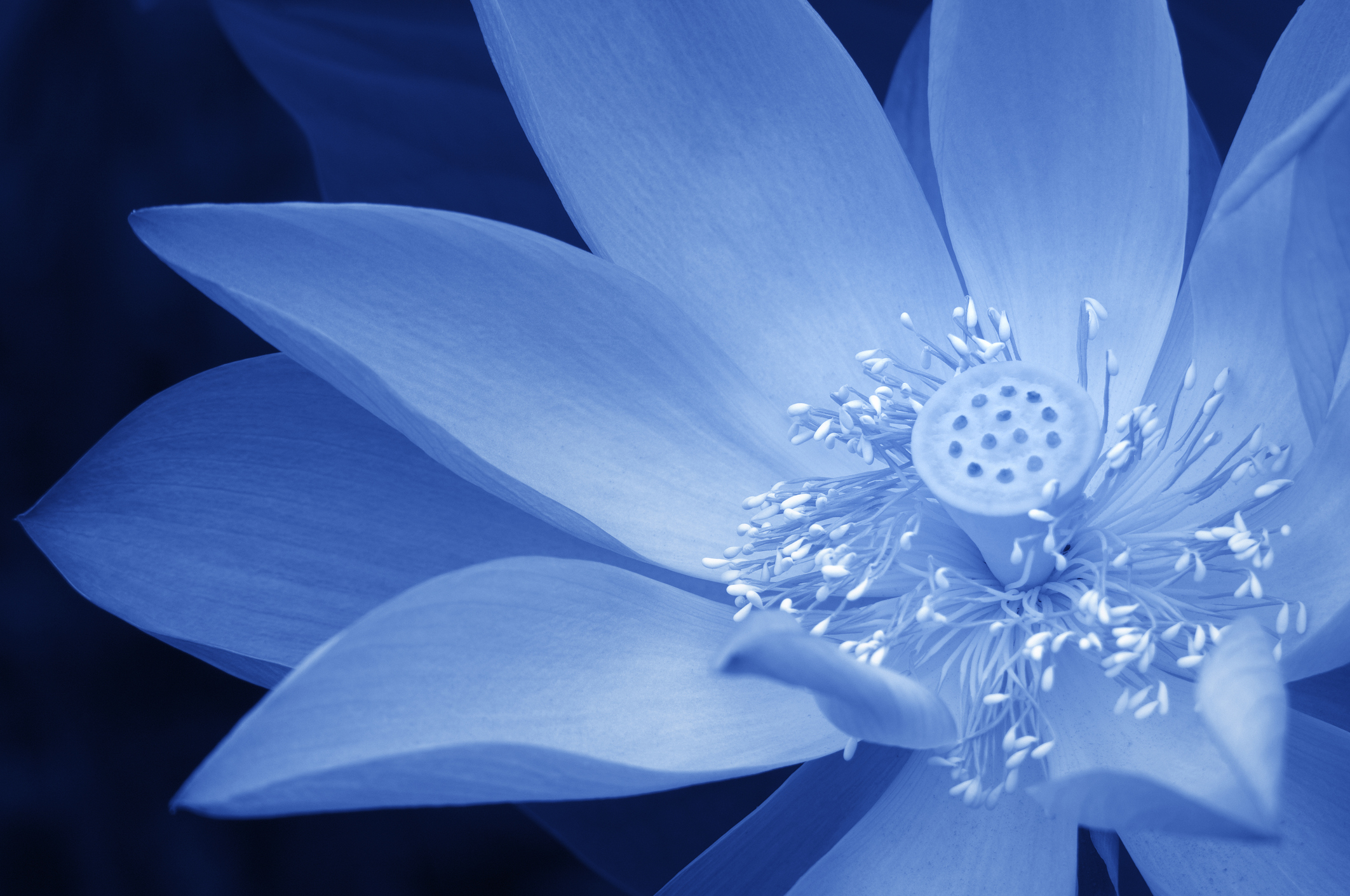 Blue lotus counselling psychotherapy mightylinksfo