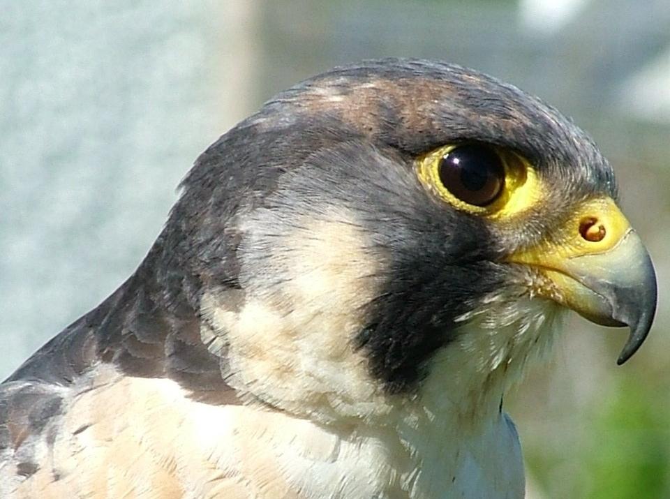 Birds of Prey -