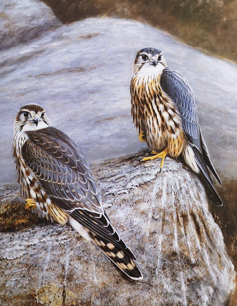 Merlins painted by Alastair Proud