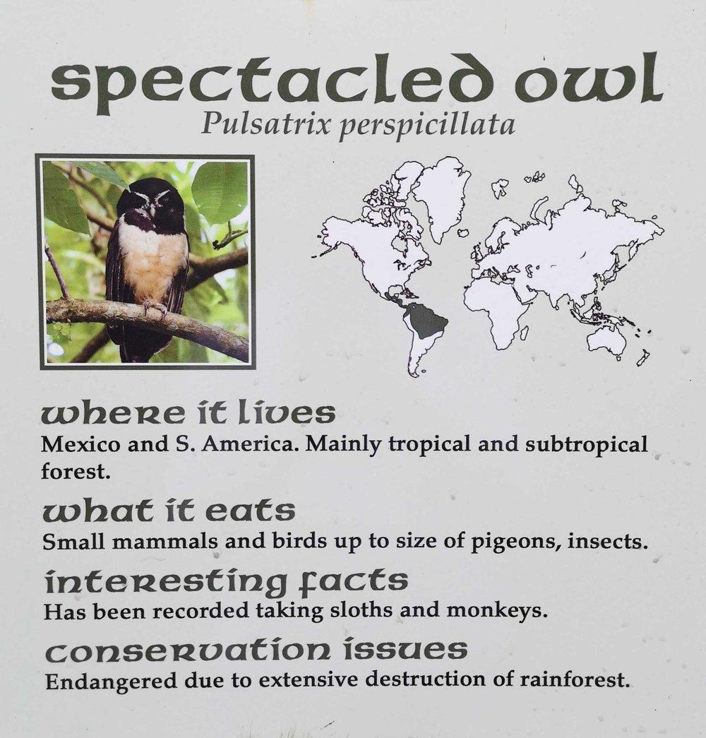 spectacledowl.jpg