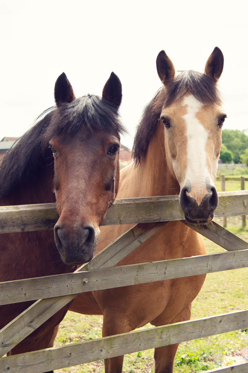 The Horses - Active ParticipantsOur horses are experienced and have a proven record in creating safe, effective, profound, delightful Equine Guided Learning events. We take pride in the fact that they are relaxed and happy and willing to show up for the work.