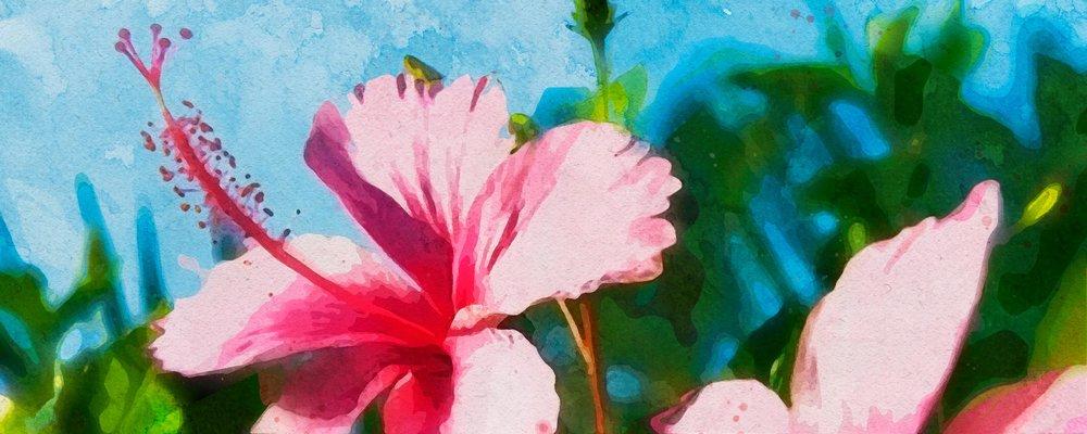 Hibiscus Flower Tea