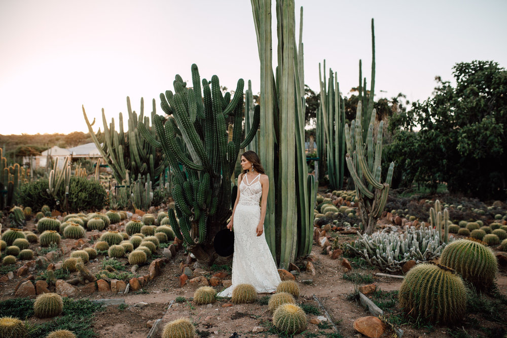 Cape-Town-Pia-Anna-Christian-Wedding-Photography-South-Africa-Bride-Cactus-4.jpg