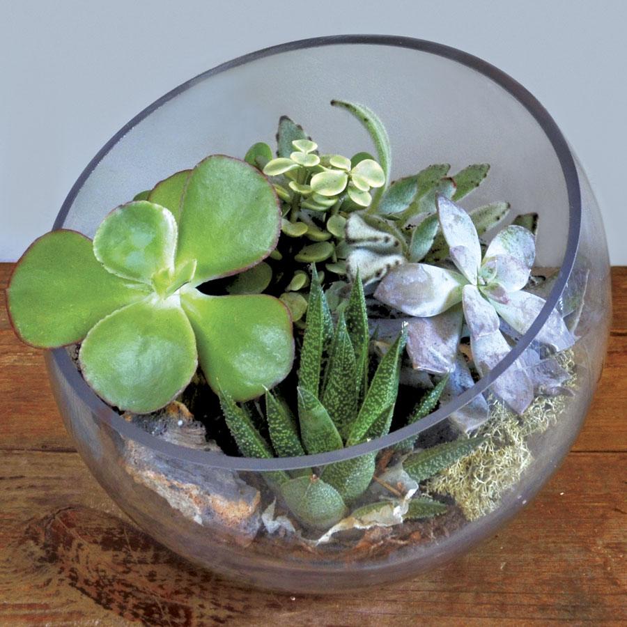 engaging-succulent-terrarium-23-37272.jpg