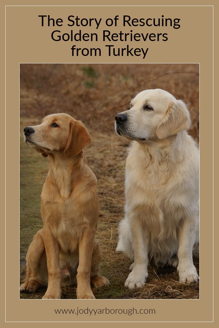 golden turkey dogs.jpg