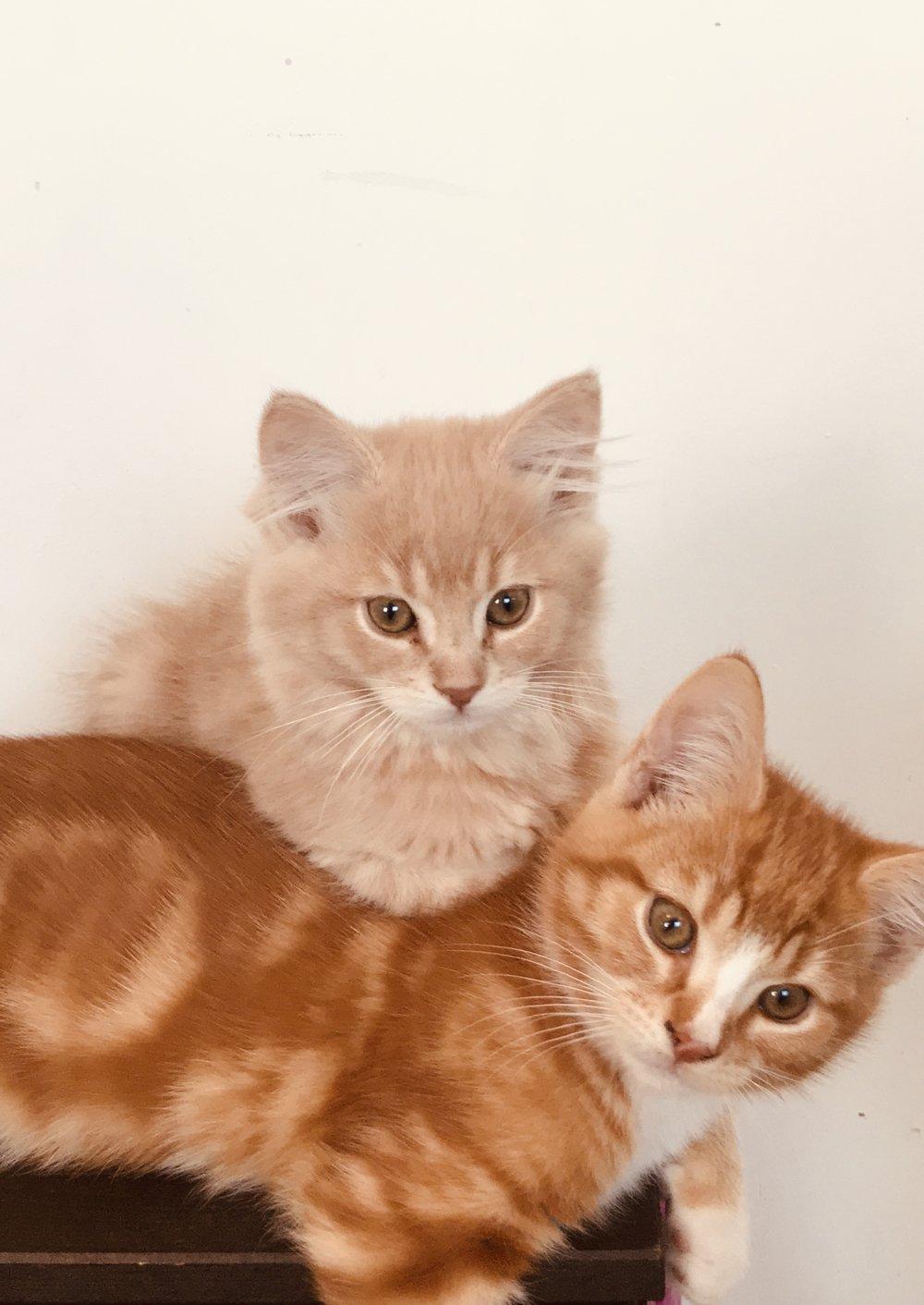 kattungene .jpg