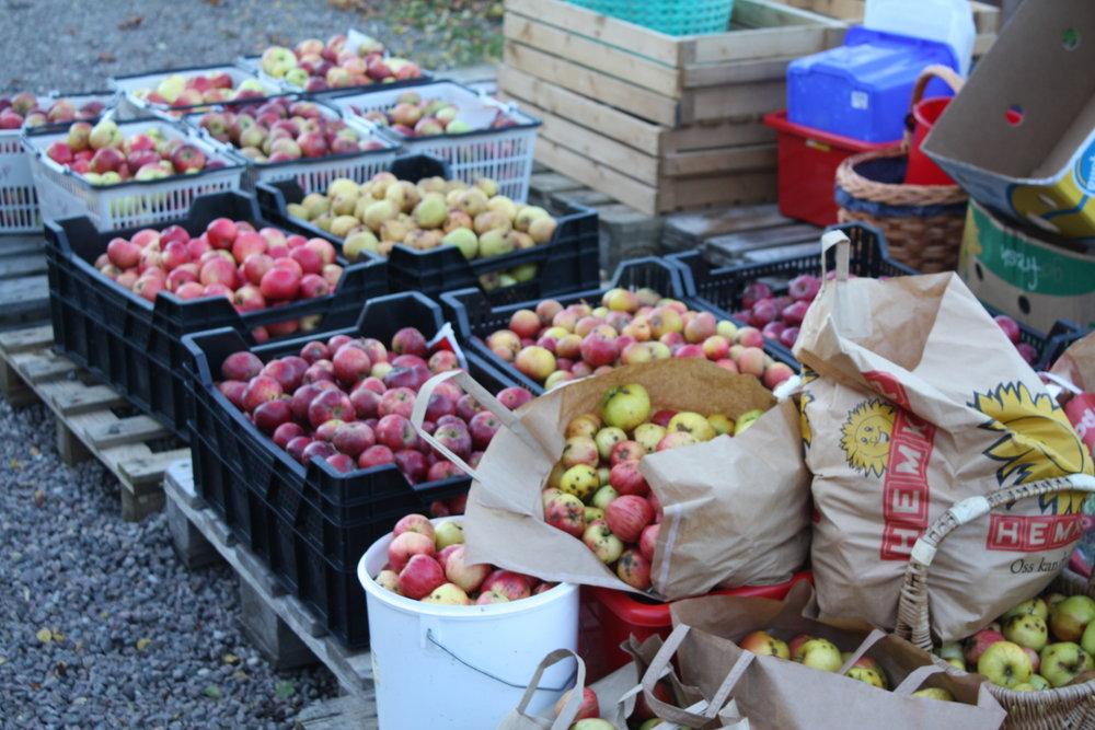 Äpplen WX -