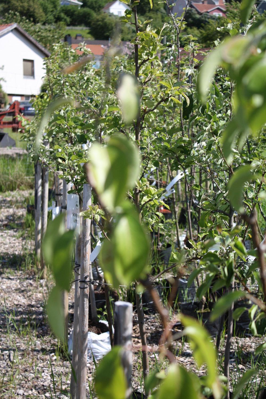 Lövträd och Buskar -