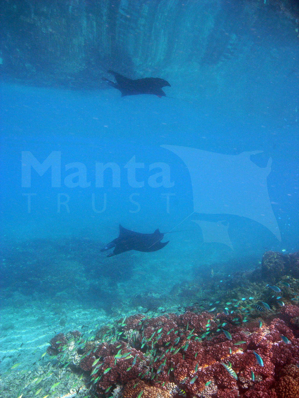Reflection, Manta Channel, Yasawas, Fiji. Steve Pollett.jpg