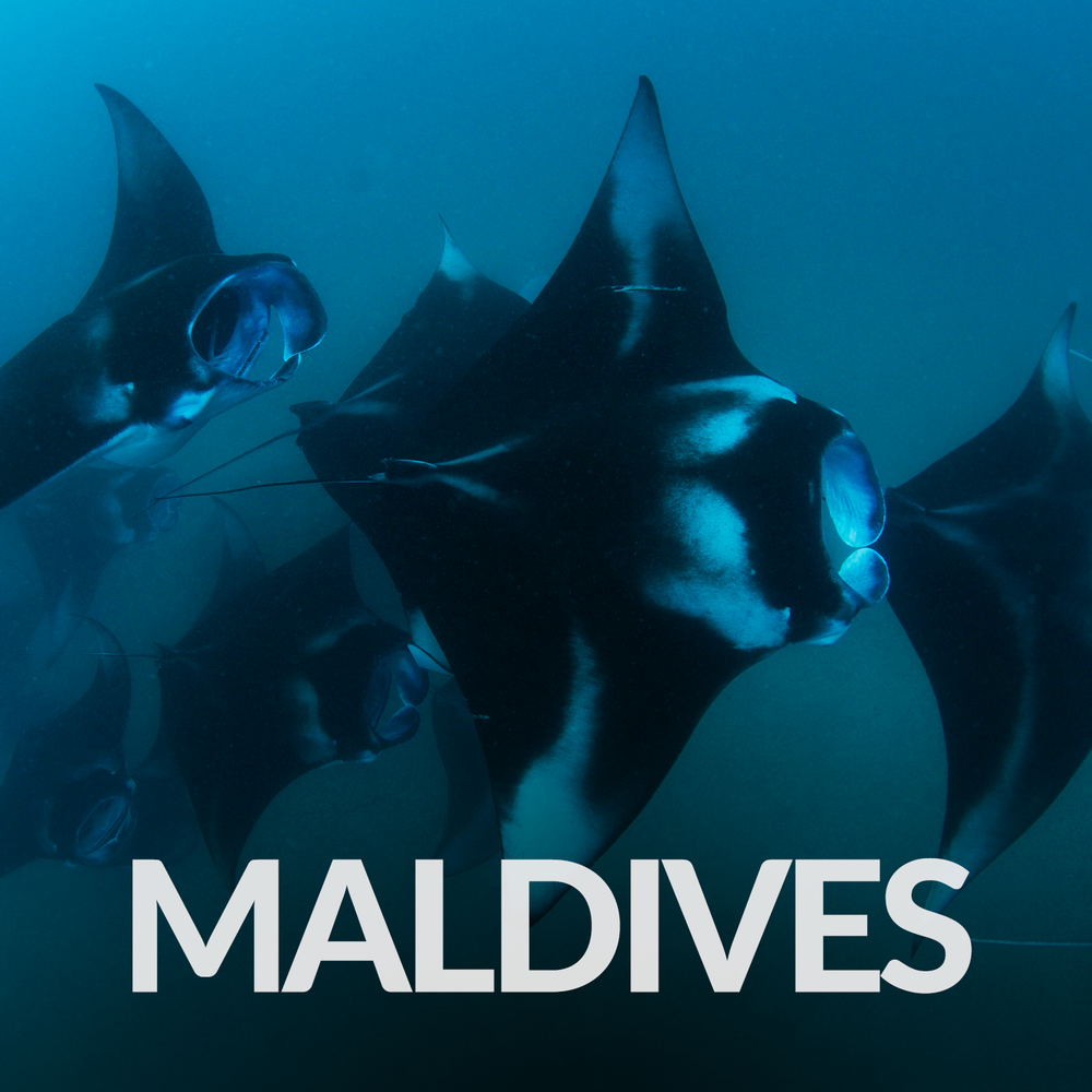 Our Affiliate Projects_Gallery_Maldives.png