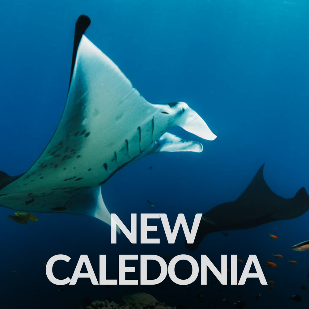 Our Affiliate Projects_Gallery_New Caledonia.png